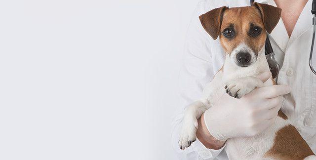 Clintonville Veterinary Hospital | Veterinarian in