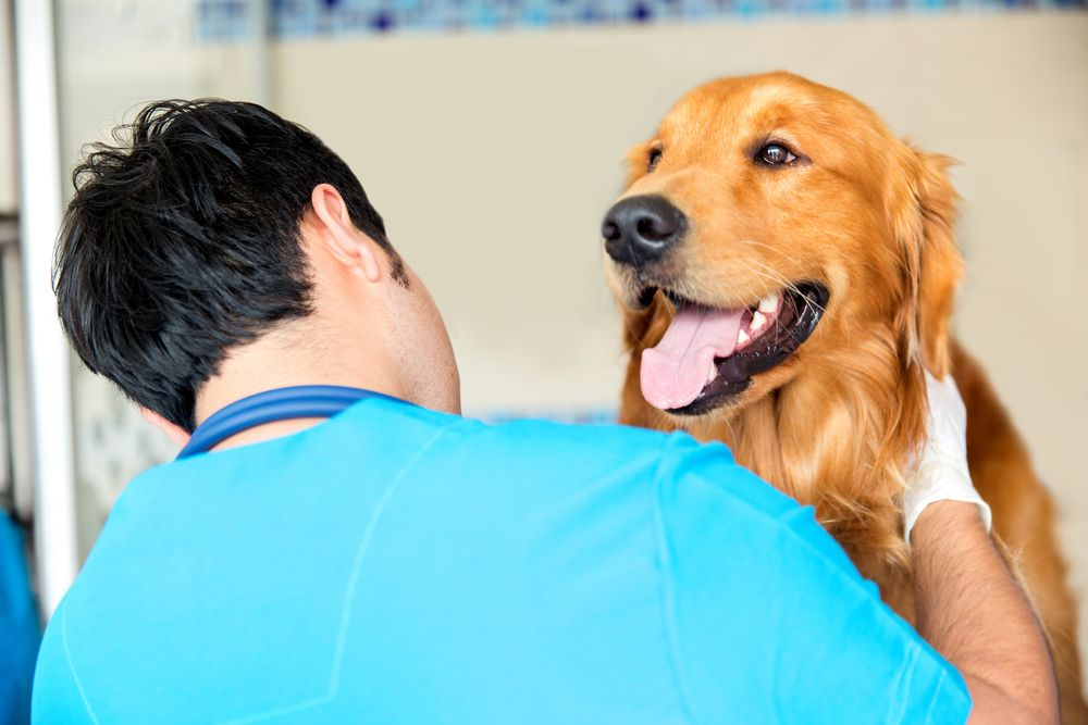 happy dog in a veterinary clinic