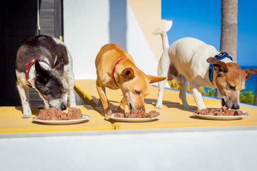 dogs in a row eating