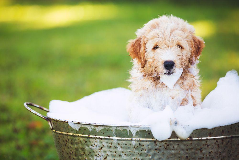 puppy taking a bath