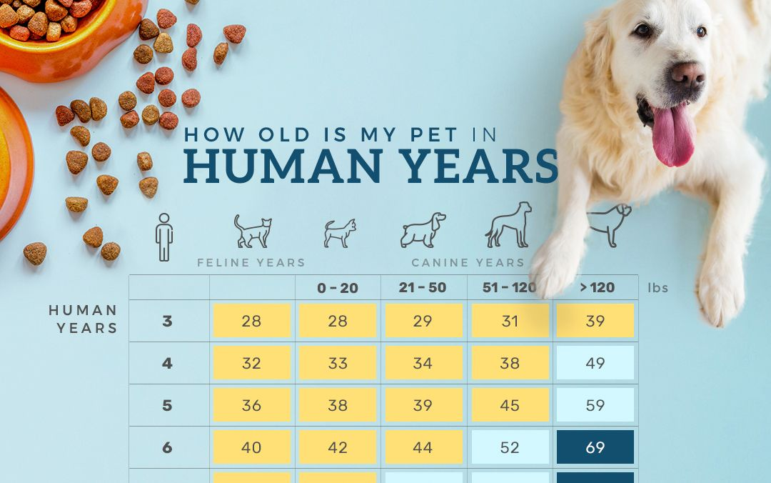 How Old Is My Pet In Human Years?