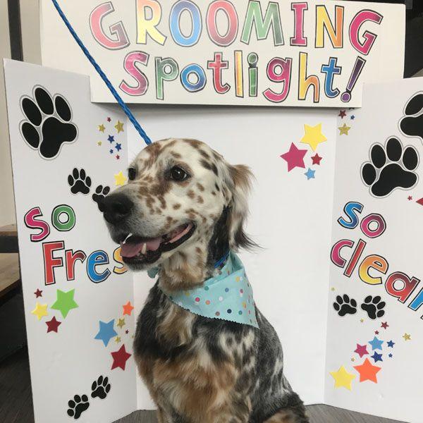 Homewood Pet Grooming