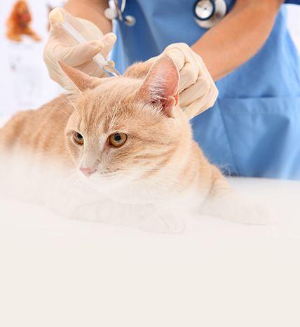 cat in a vet clinic