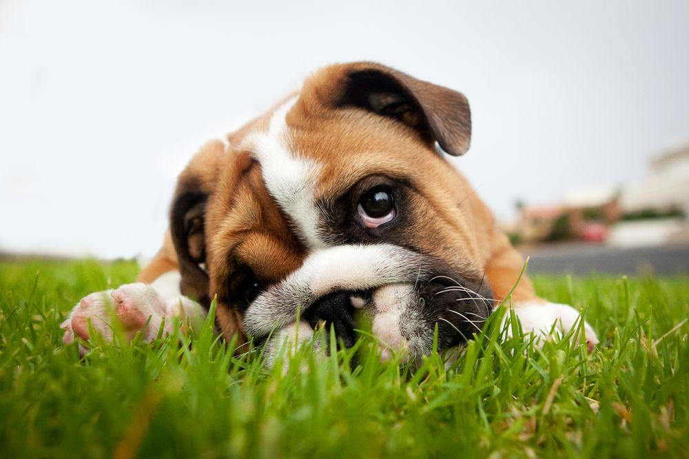 pet chronic disease management