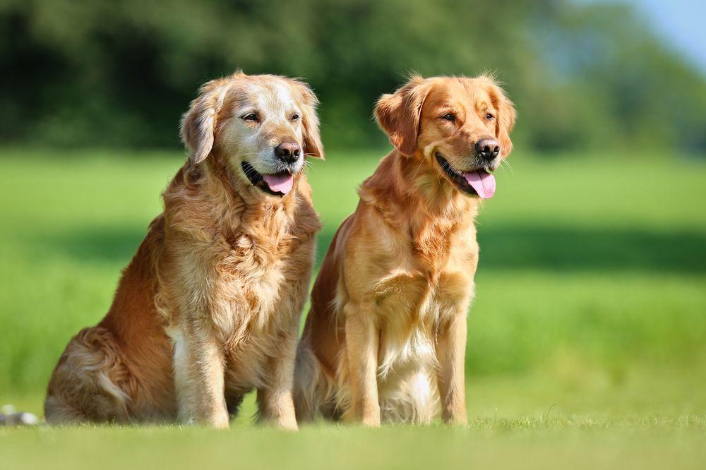 senior pets