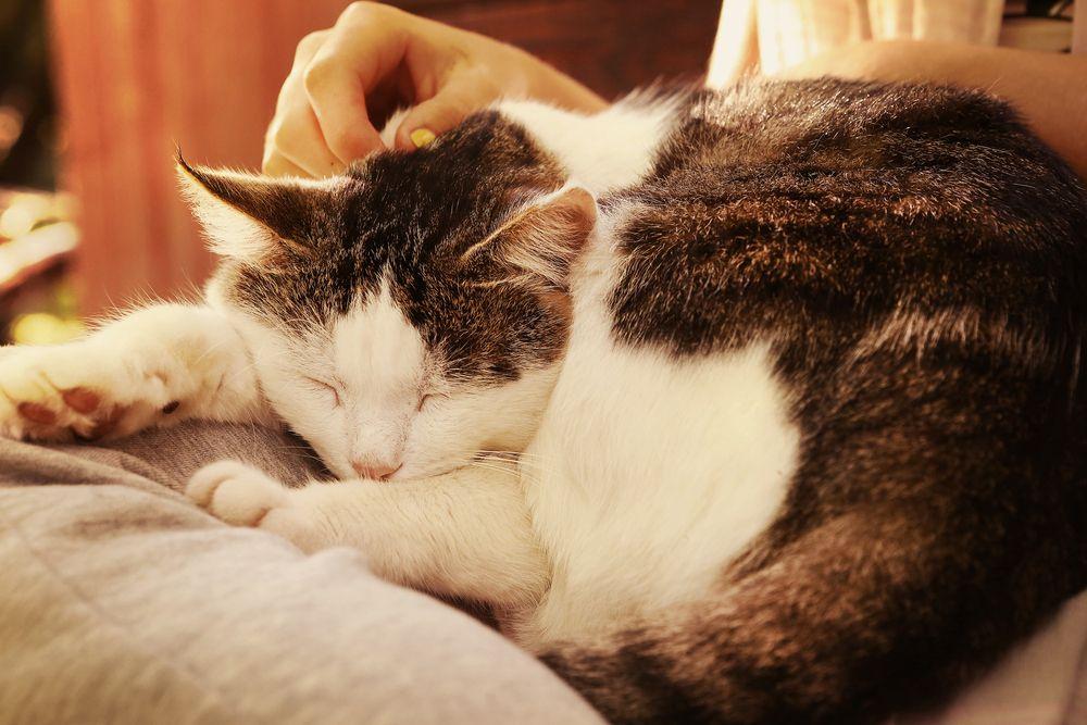 sleeping senior cat