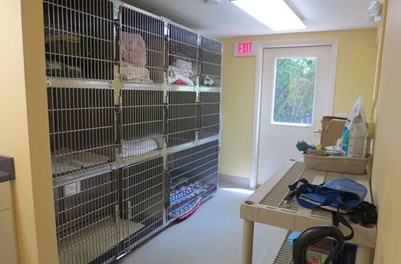 Boston Road Animal Clinic