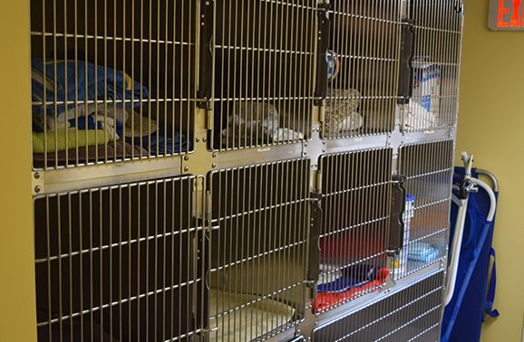 Boston Road Animal Clinic