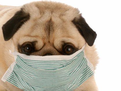2017 Canine Influenza Outbreak