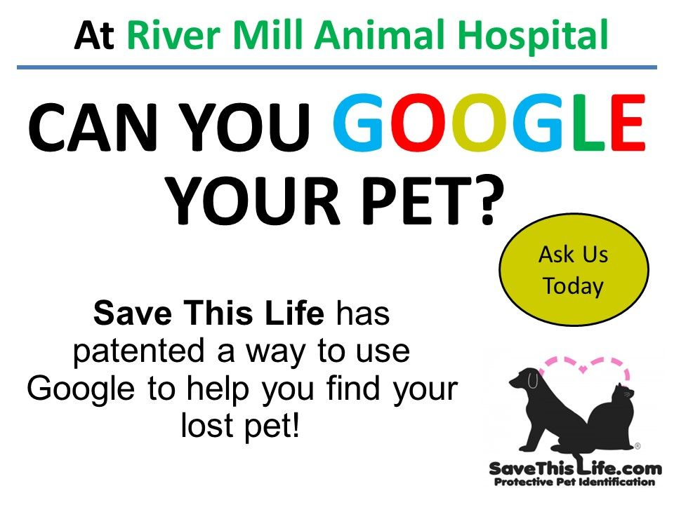 Pet Microchipping In Tampa