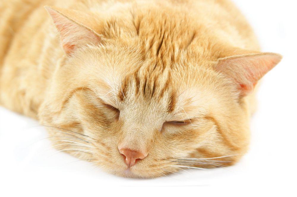 Sleeping cat 2