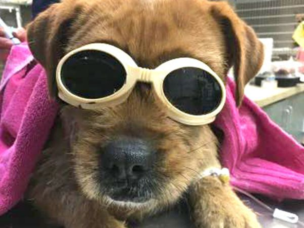 dog in laser goggles