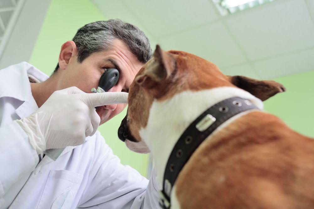 pet eye exam