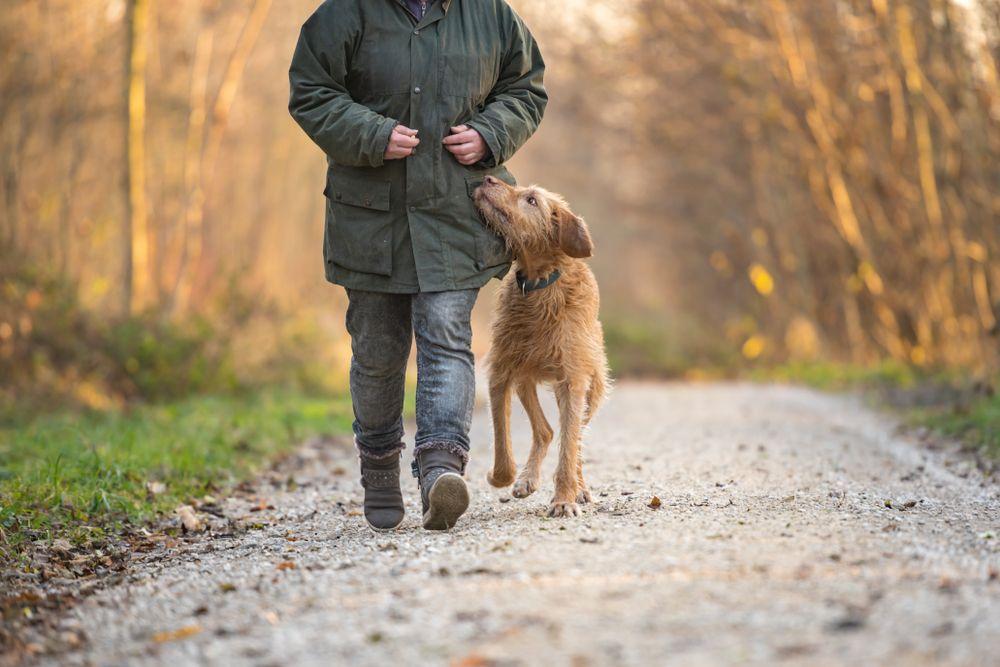 senior pet with pet parent