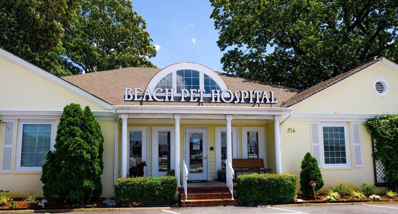 beach pet hospital