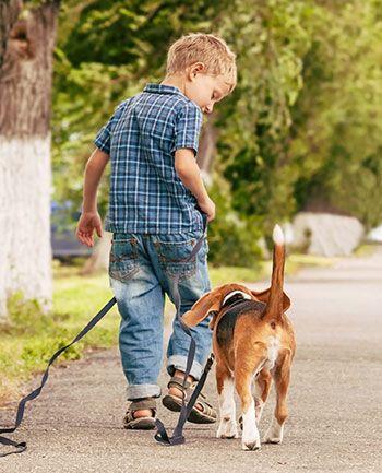 child and beagle