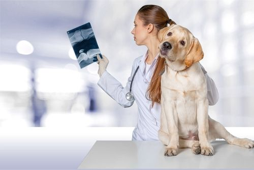 xrays for dogs