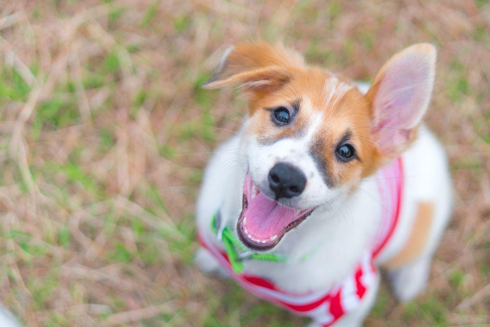 East Nashville Pet Resources