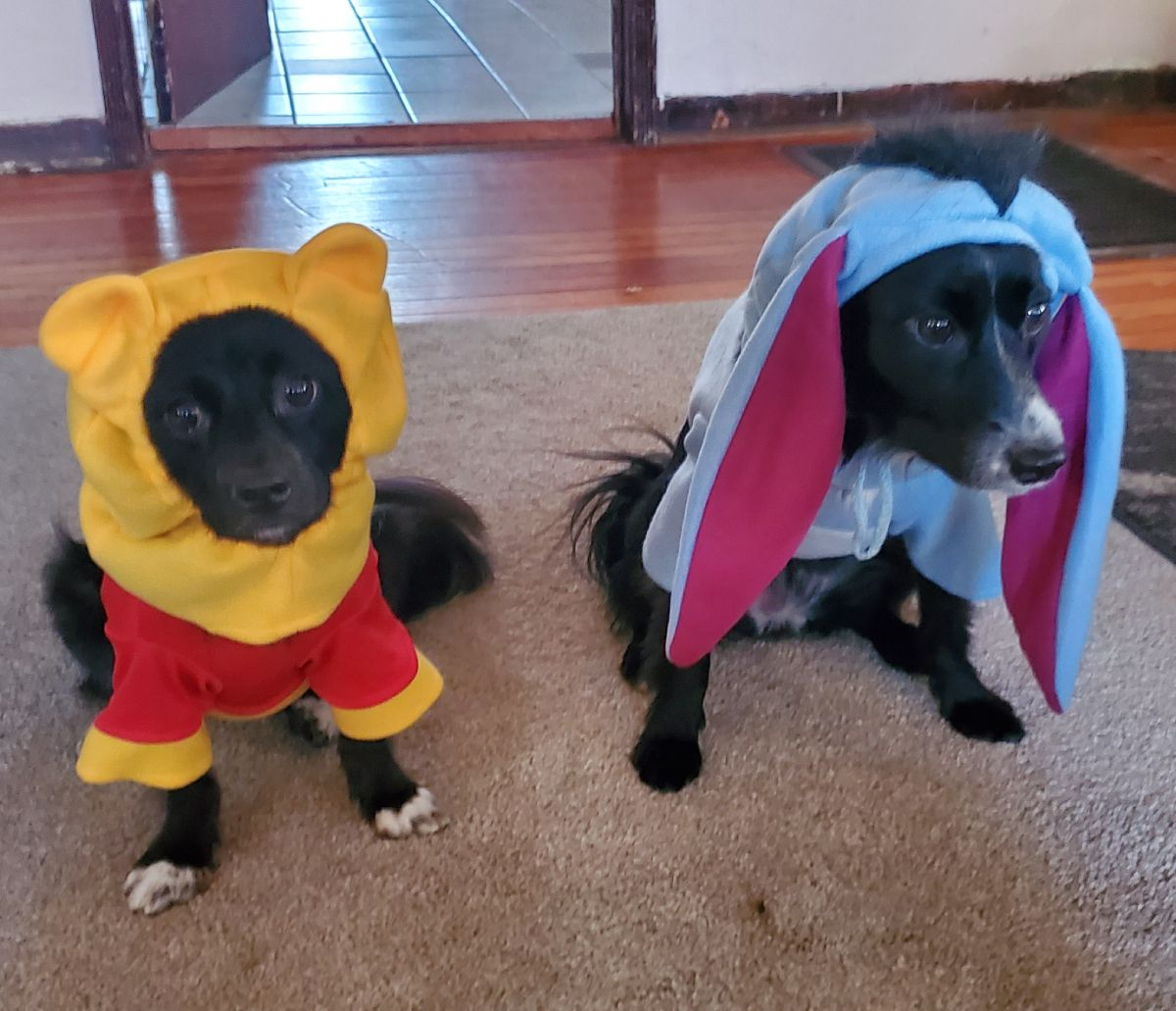 Pixie as Eeyore and Karma as Winnie the Pooh