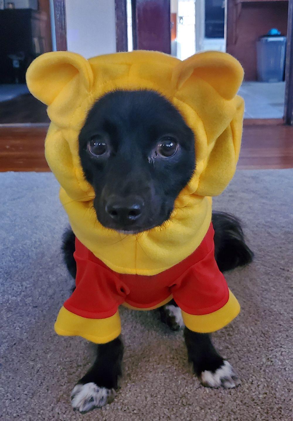 Karma as Winnie the Pooh