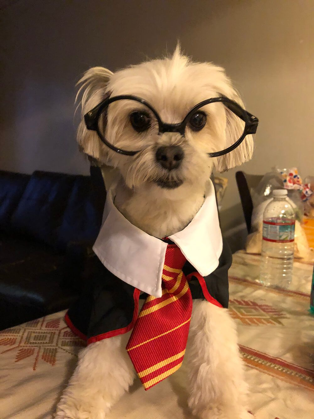 Buddy as Harry Potter