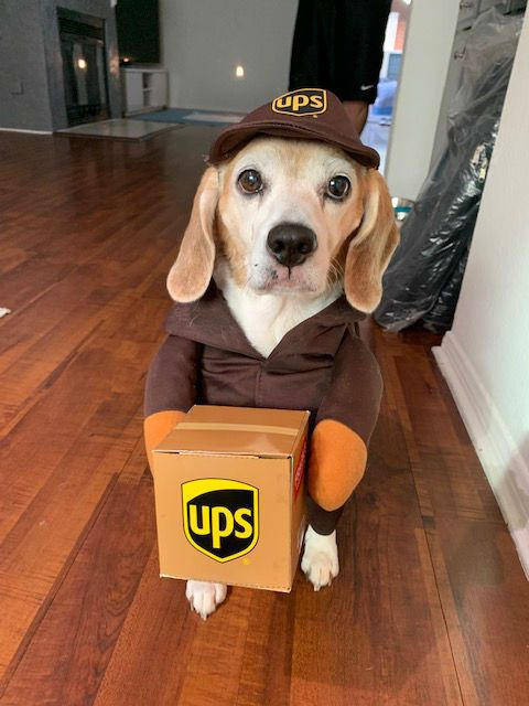 Coco as UPS Delivery Girl