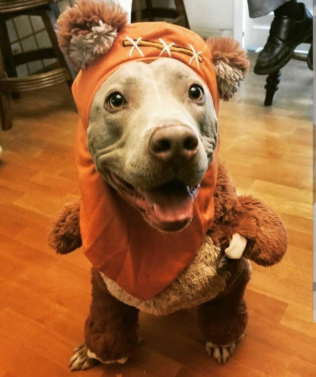 Hank as an Ewok
