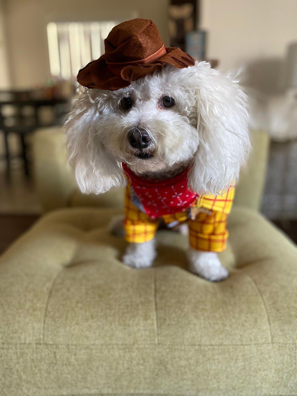 Pancho as Woody