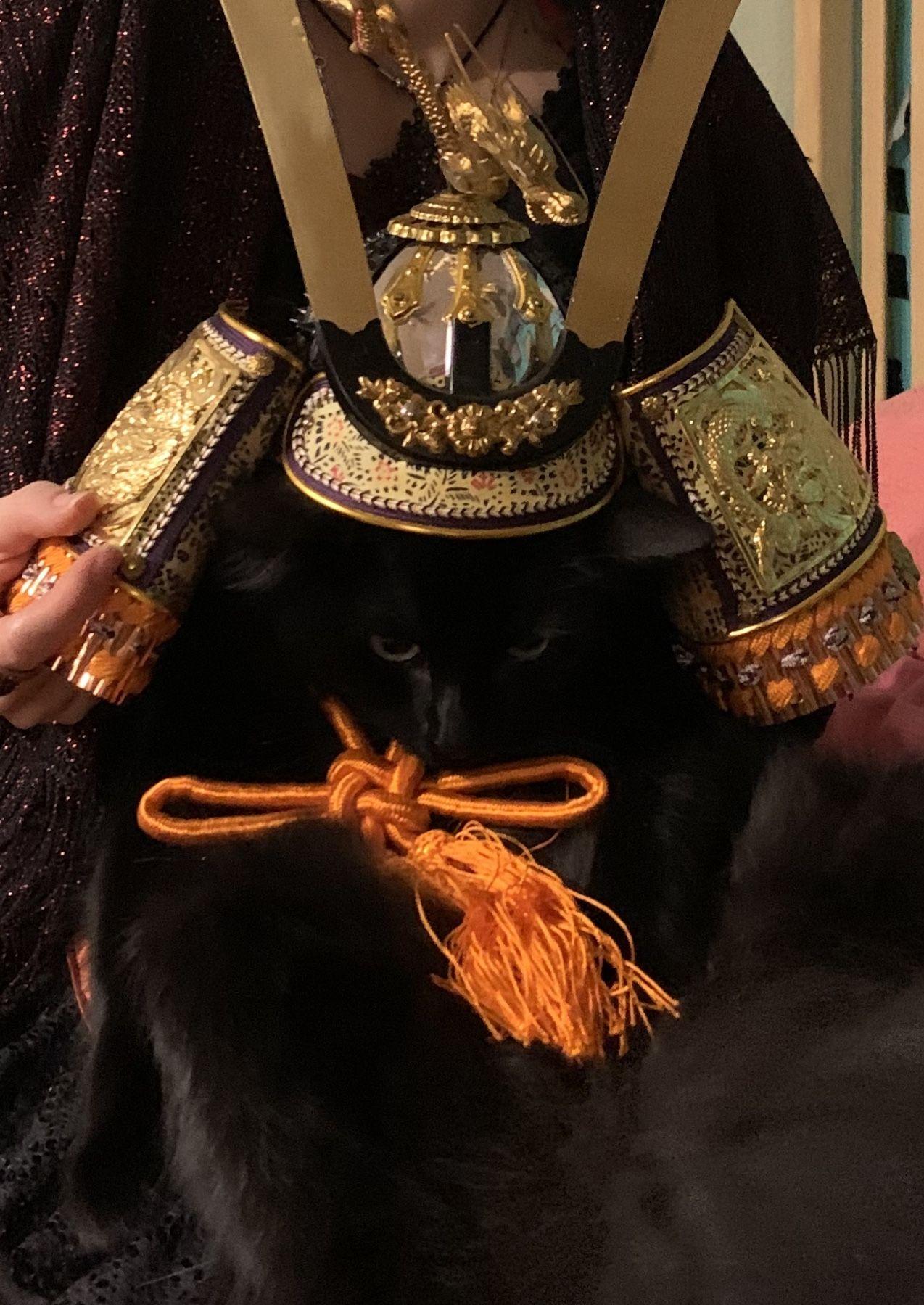 Ciarán the Warrior Kitty