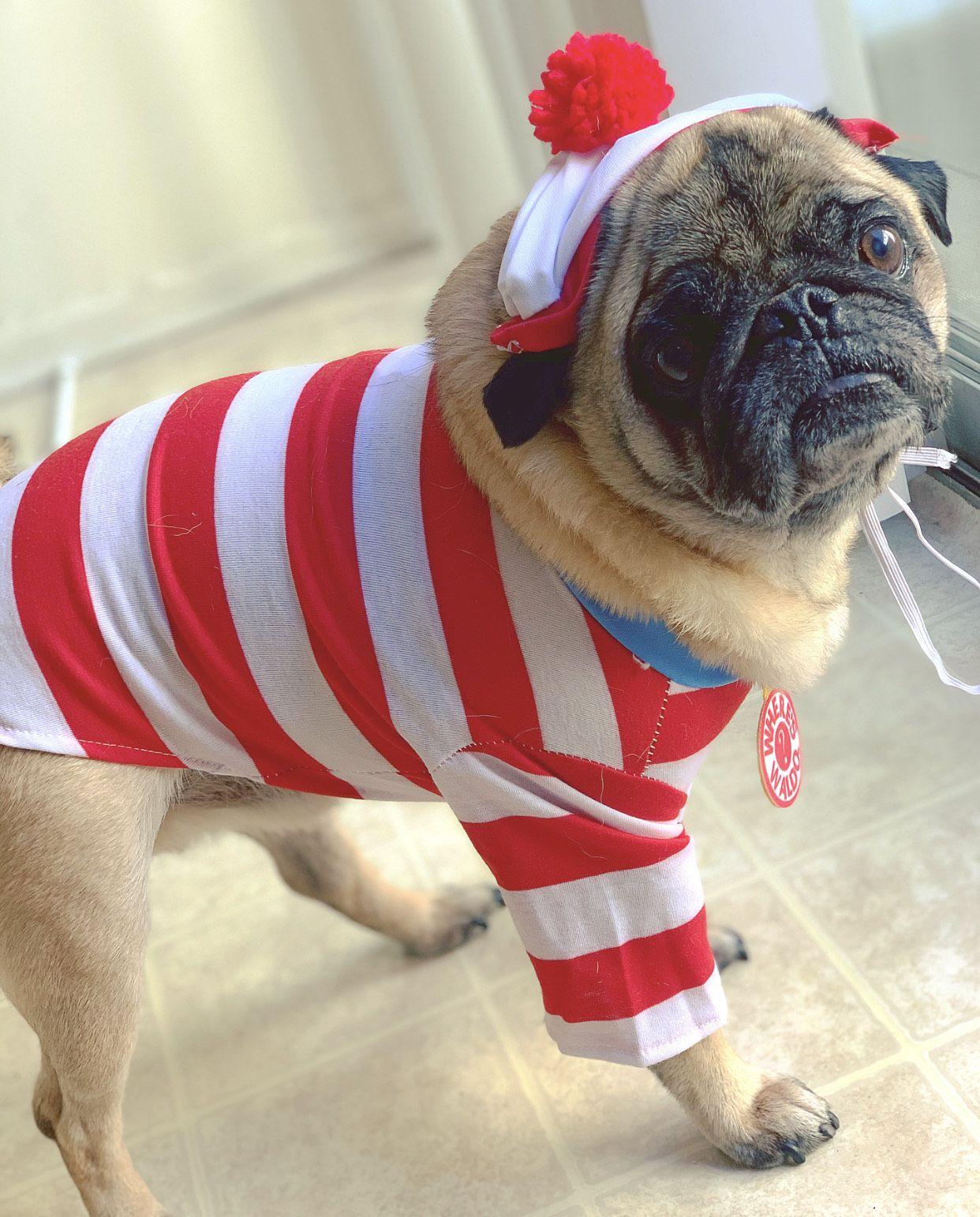 Boomer, Where's Waldo?