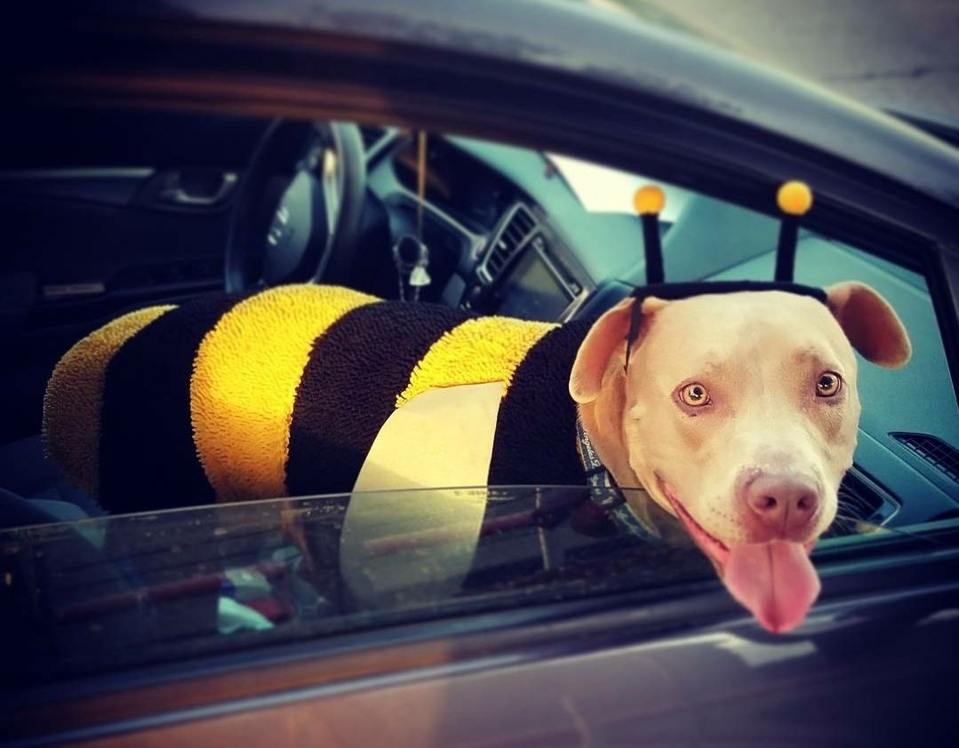 Hank the Bubbly Bee