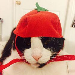 Amolavita as a Tomato