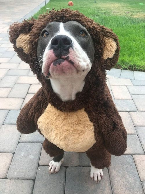 Brooklyn the Bear