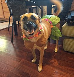 Cleo as a Hula Girl