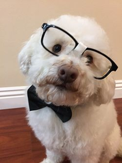 Junior the Nerd Dog