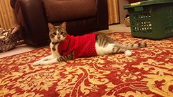 Lalaji in a crocheted outfit