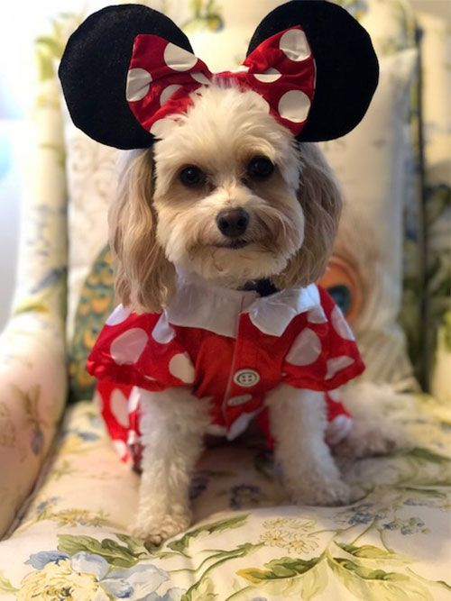 Snowy as Minnie Mouse