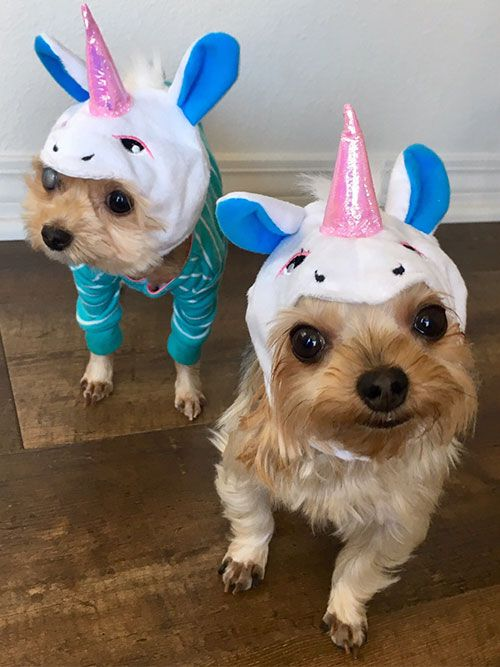 Tasia & Cooper as Unicorns