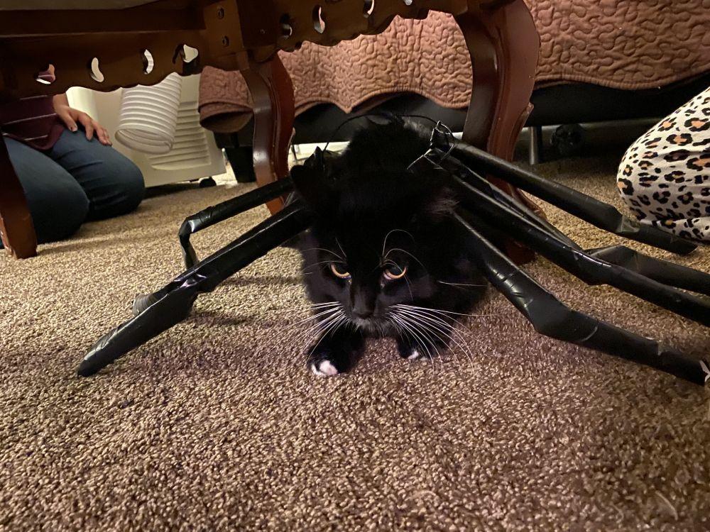 Tuna Luna as a Spider