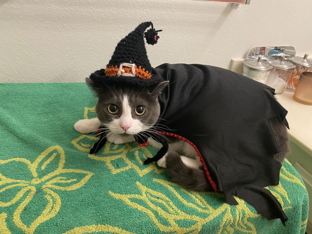 Cleopatra as the Wicked Witch of the West