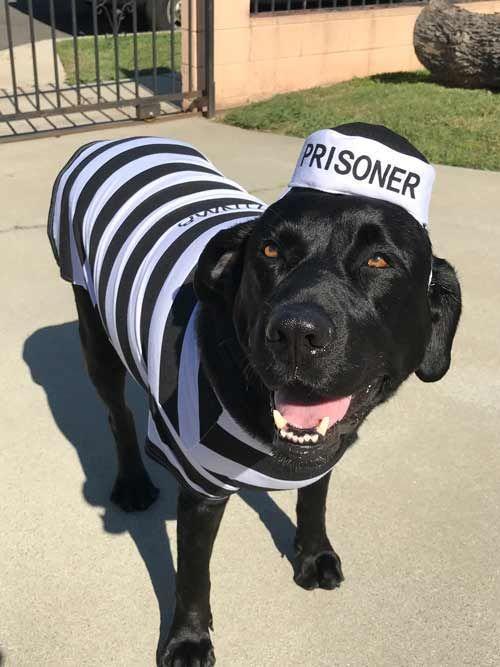 Mandoo Prison Inmate