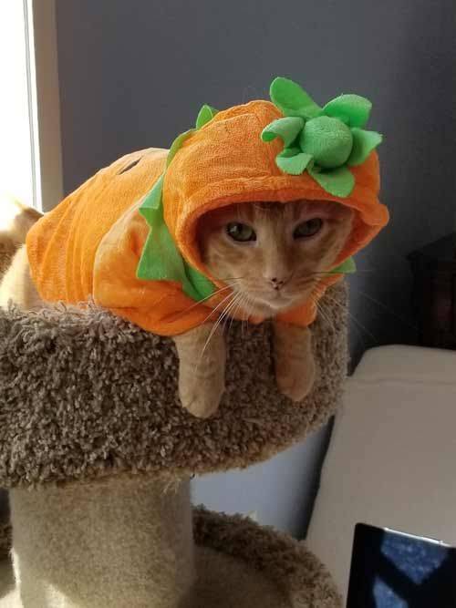 Spice as a Pumpkin