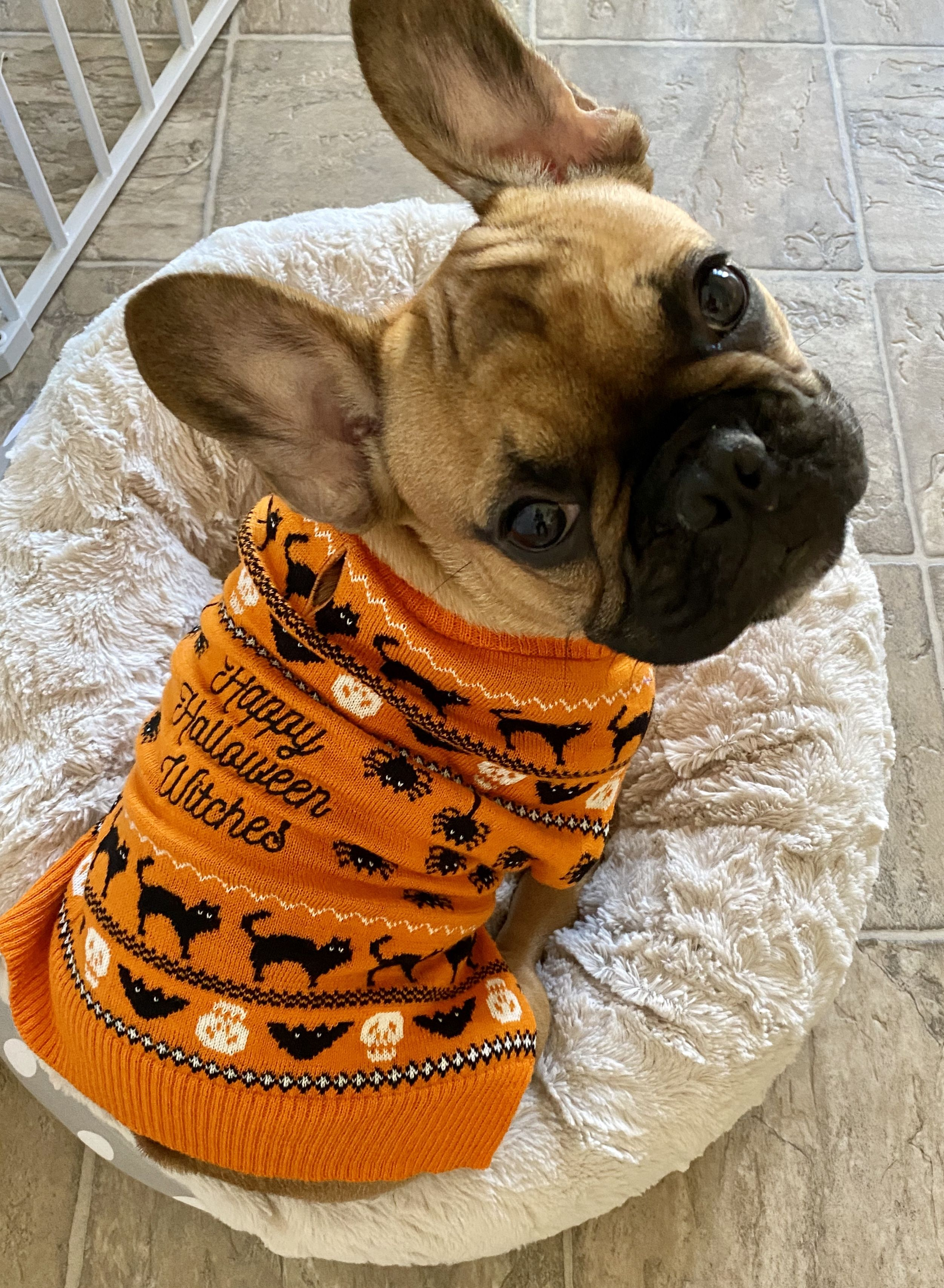 Chaz in a Halloween Sweater