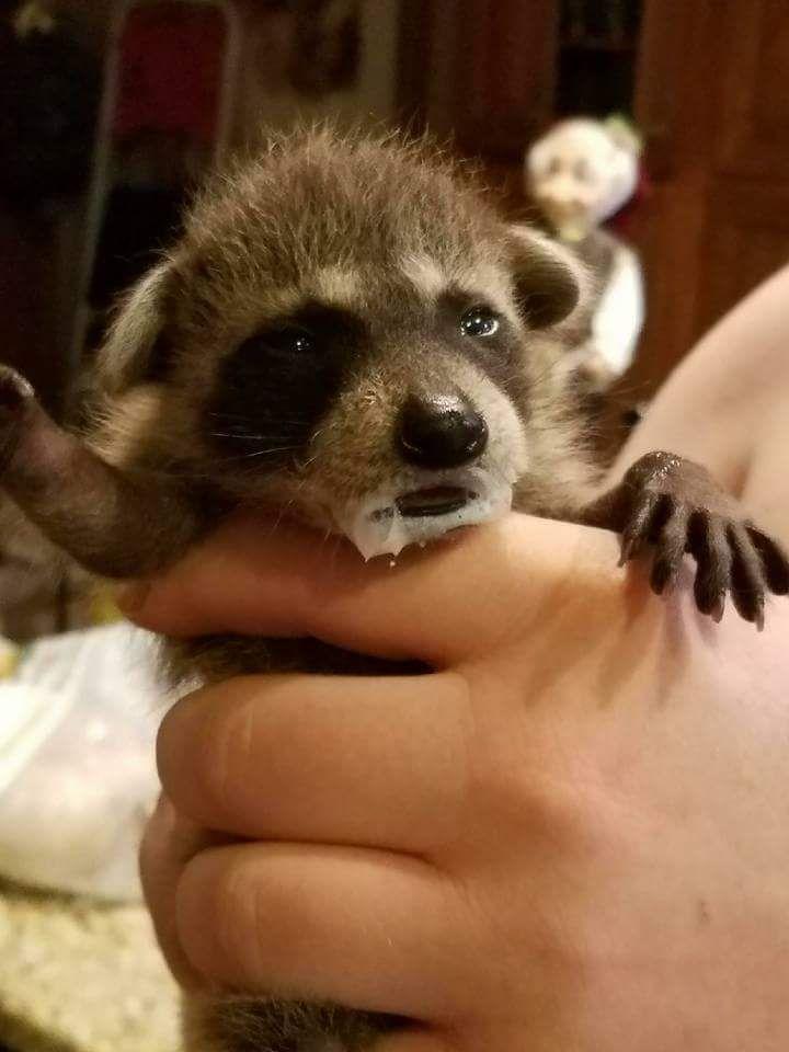 baby wild animal