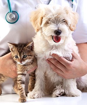 pet diagnostics