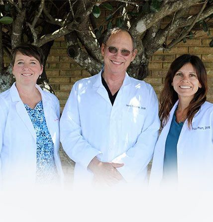 team of veterinarians
