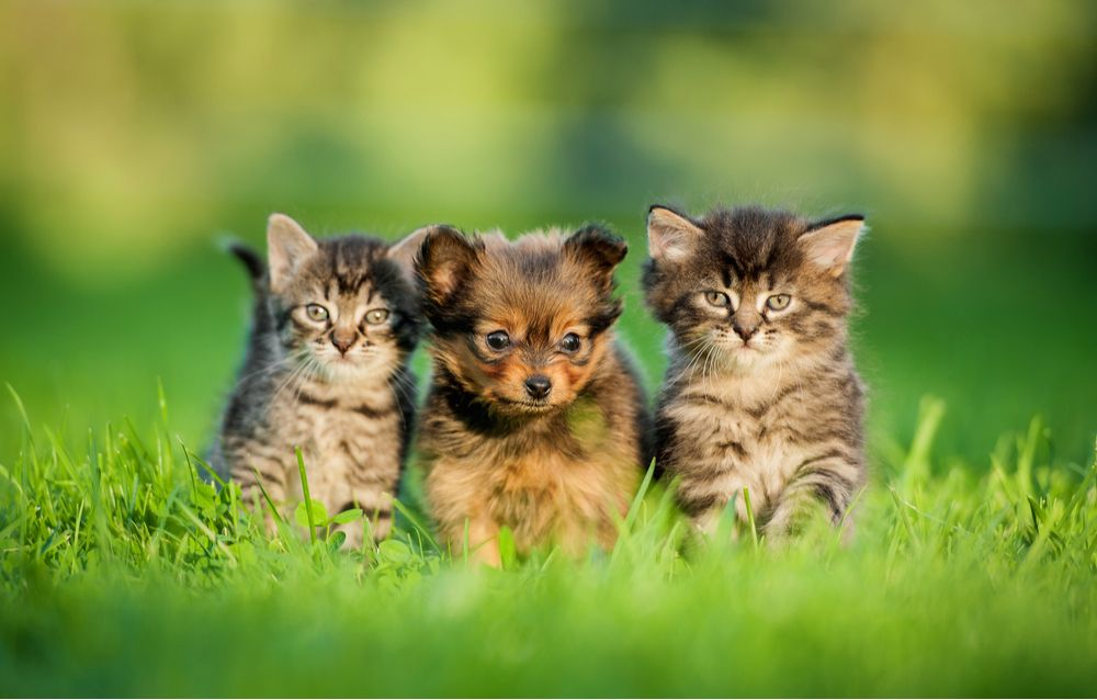 Importance of Spaying/Neutering your Pet