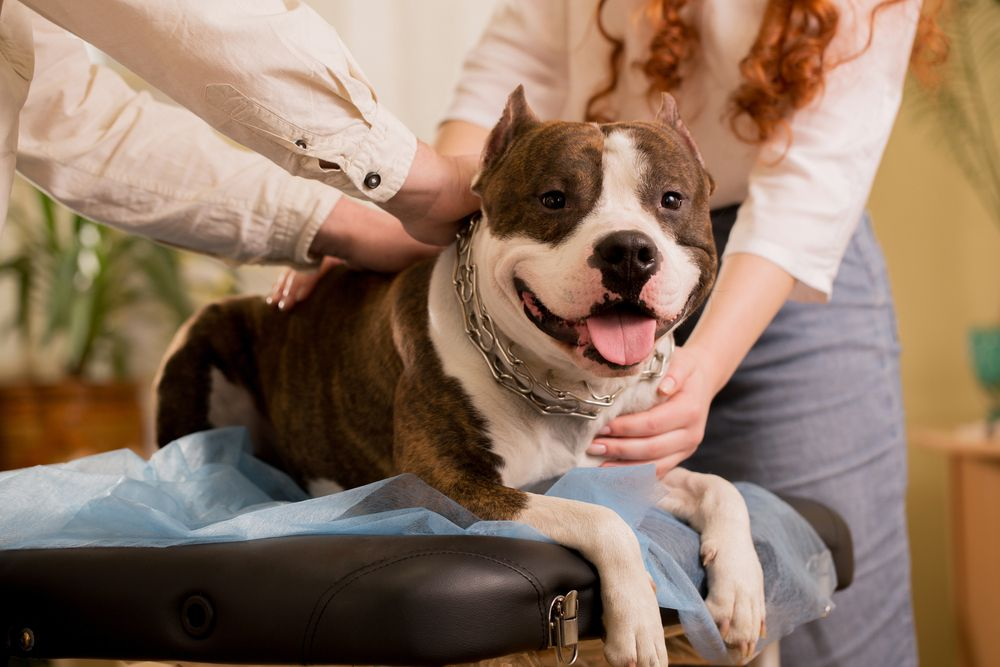 Why Bring Your Pets in for Routine Exams
