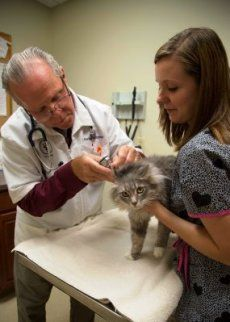 vet checking cat