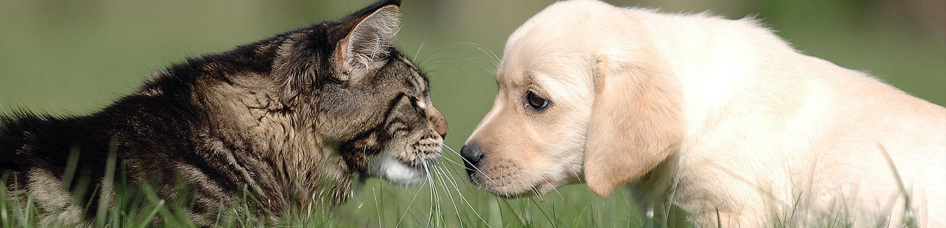 cat and dog face to face